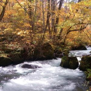 【青森観光・1泊2日1人旅】友人と紅葉真っ最中の奥入瀬渓流へ