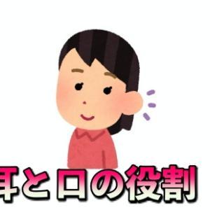 必須セールストークノウハウ!耳と口が持つ役割を知ろう!