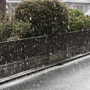 【日々のこと】ホントに雪降ってる‼️
