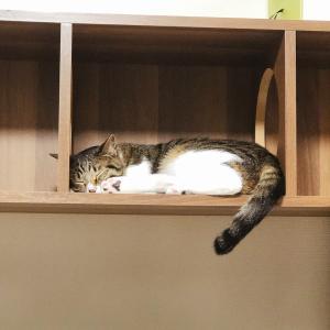 【ひびのこと】いくら寝ても眠い時・・・・