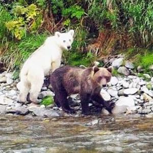 白いクマの物語