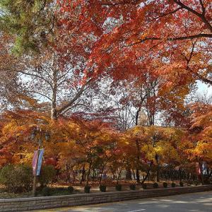 「ソウルからリポート」まだ紅葉が残ってるところはあります!