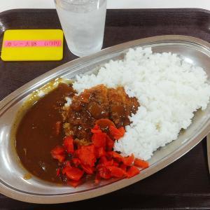 金沢県庁内の食堂、県庁特製カレーがおすすめ。ランチのみで安くておいしい