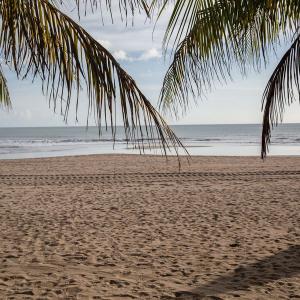 コロナ禍の新生活を経て、ハワイ住民は観光客にうんざり