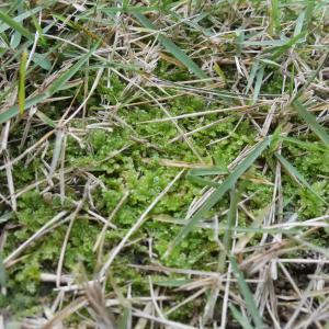 ヤバい? 芝生に苔が生えてるよ~