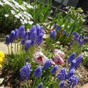 春先の庭でほっこり…雑草取りに勤しむ