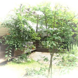 雨上がりの庭掃除と虫よけ化粧水