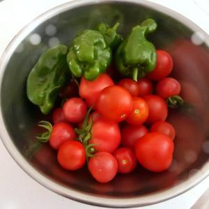 家庭菜園の収穫…トマトの冷凍