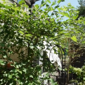 暑い中での庭仕事…