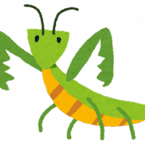 大葉にカマキリ…(カマキリは益虫)