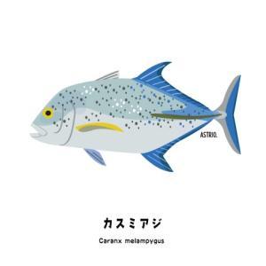 釣り人にも人気!カスミアジさん