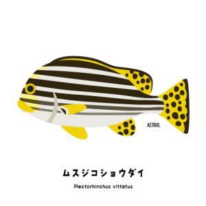 別名阪神タイガース!ムスジコショウダイさん
