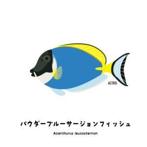 インド洋固有種!パウダーブルーサージョンフィッシュさん
