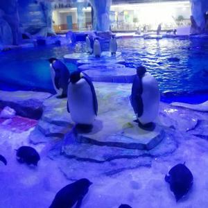 【その2  完結】上海で最大の水族館、上海海昌海洋公園に行ってきた!