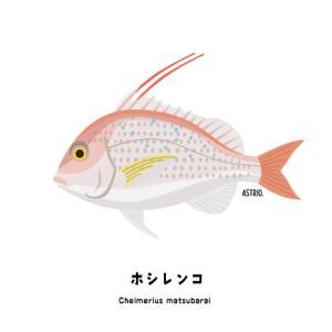 奄美群島の固有種!ホシレンコさん