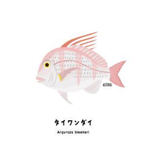 実はマダイより美味!レア魚のタイワンダイさん