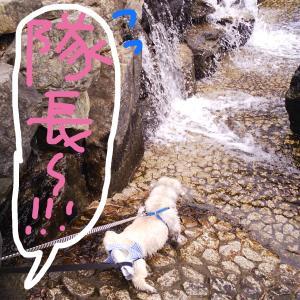 【ペキニーズ】隊長、滝に突っ込む!!