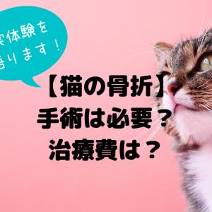 【猫の骨折】手術は必要?治療費はどのくらい?
