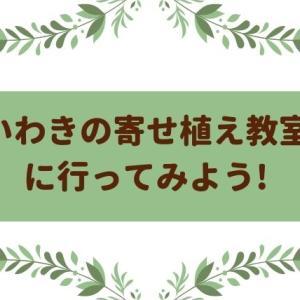 【口コミ】いわきで寄せ植え教室を探すなら盤植で決まり!お花を趣味にして癒されよう