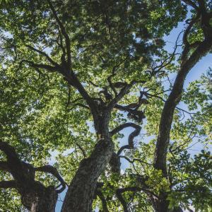 樹齢400年説の巨木がある八幡平神社、撮影できました