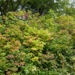 秋に染まっていく八幡平