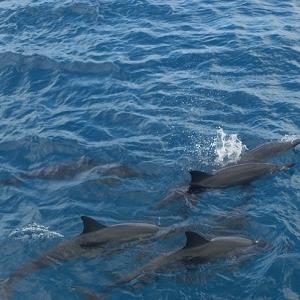 グアム旅行でオススメのオプショナルツアー(アクティビティ)BEST3