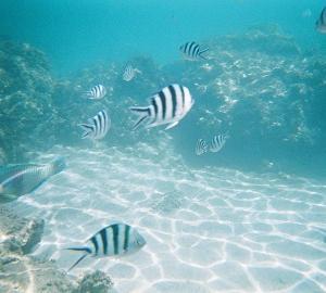 シュノーケルに最適な水中カメラは「写ルンです 防水タイプ 」がおすすめ!実際に撮影した写真をお見せします!