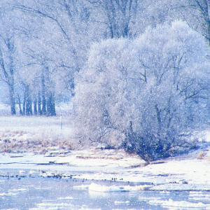 【カナダ留学】マイナス20度の極寒を乗り切れ!冬を越すための必須アイテム集