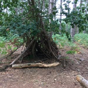 森の秘密基地
