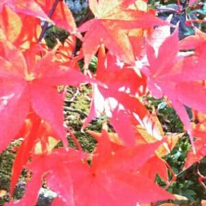 今日は地球感謝の日【日本の四季】に感謝