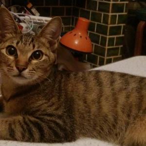 猫と同じ布団で寝る夢かなえます