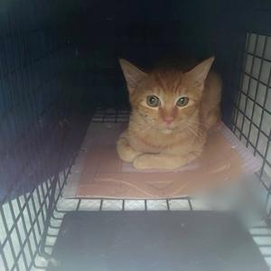 保護した猫とできなかった猫。猫生を分ける判断は辛い