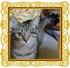 貴方もしもべ⁈ 第2回#押し猫グランプリ