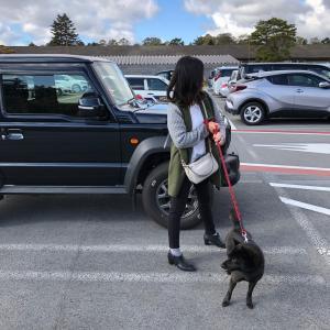 甲斐犬in軽井沢