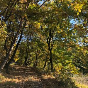 朝の散歩 秋
