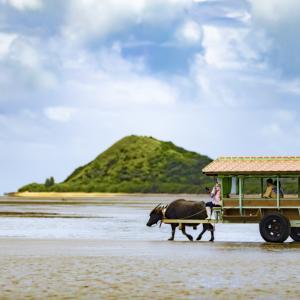 水牛車だけじゃない。歩いて海を渡って由布島へアクセス。