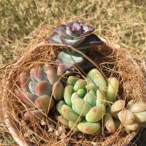 新しい多肉植物と花