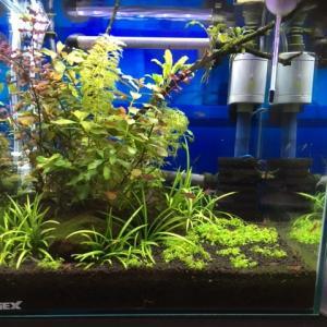 水草水槽と水草の考察
