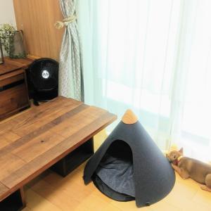 柴犬サンのテントと社会化トレーニング