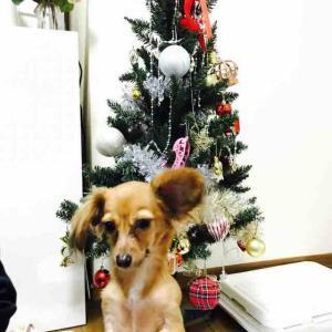 ワンコのためのクリスマスツリー