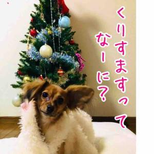 クリスマス準備はじめます!