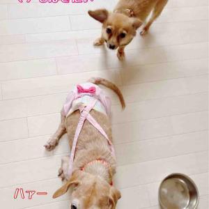 シニア犬問題