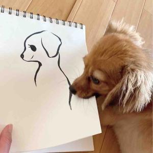 マメを描く
