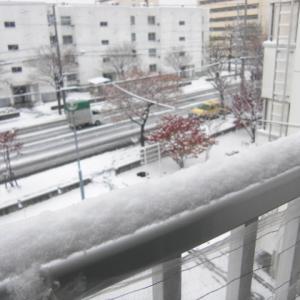 とうとう雪が・・・