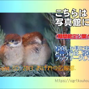 謎の緑の鳥の写真集 巣立ちまで