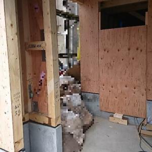 耐力壁・構造合板が徐々に施工されてきました。