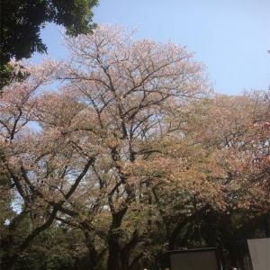 お花見 駒沢オリンピック公園(2018年)