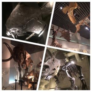 上野 国立科学博物館に行ってきた(2018年)