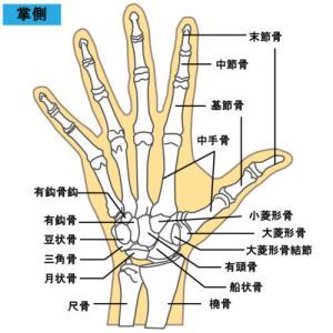 折れない指