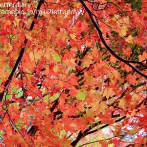 自然が魅せる色